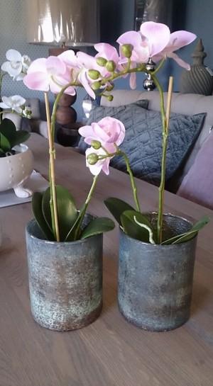 Orkidé i potte H45cm ROSA