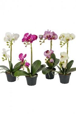 Orkidé i potte H45cm KREMGUL