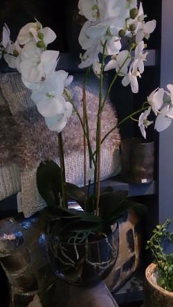 Lekker kunstig orkidé i glasspotte 70cm